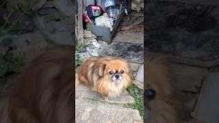 Учим собаку срать
