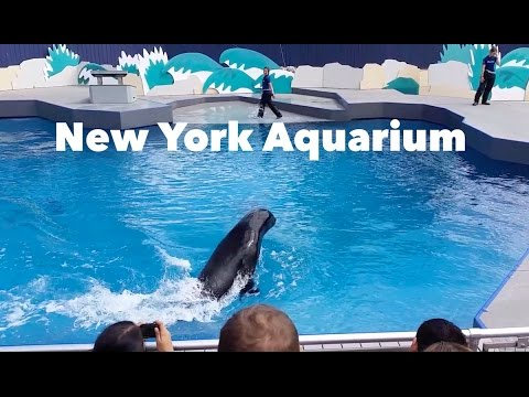 New York Aquarium in Coney Island, Brooklyn - YouTube