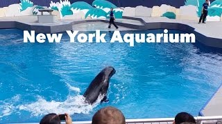 New York Aquarium in Coney Island, Brooklyn
