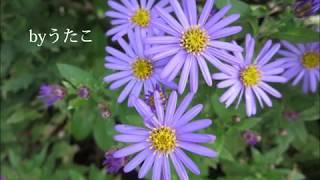 童謡唱歌 野菊 byうたこ