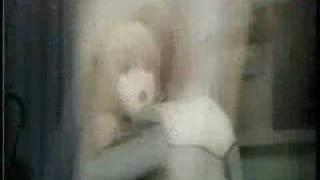 Light Yagami -- Solitary Angel