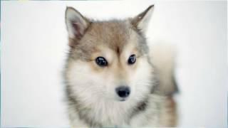 Живет такой волчонок, Наталья Николаева аудиосказка слушать онлайн