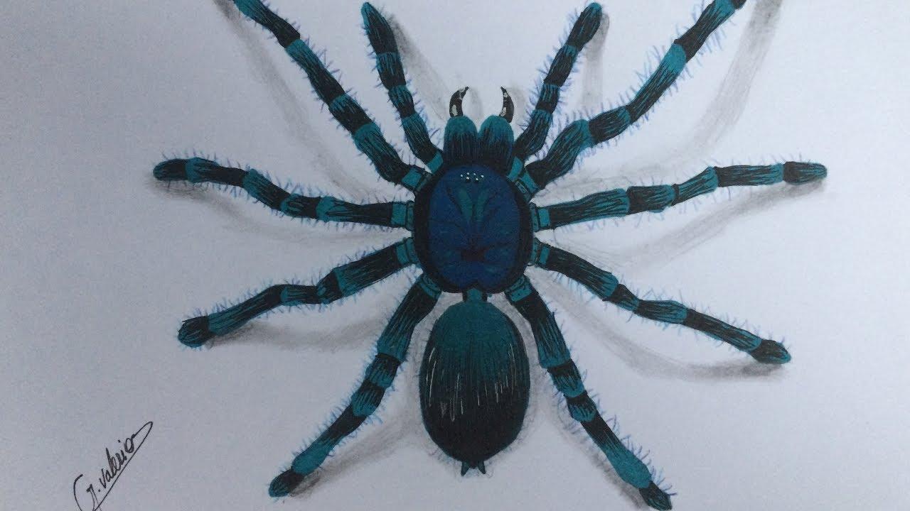 Comment dessiner une araignée réaliste - Speed Drawing 3D - YouTube