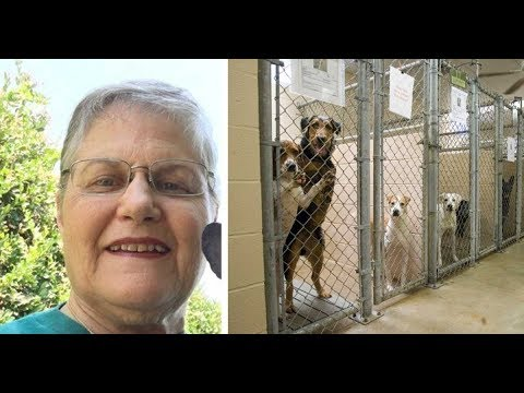 Thumbnail: Woman asks shelter for oldest, hardest to adopt dog that no one wants. Here's who they gave her