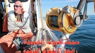 سمكة التونة العنيدة رائحة الانتقام الذكية