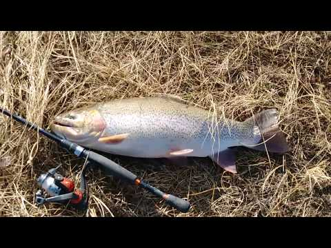 Catching MASSIVE Trout At Antero Reservoir!