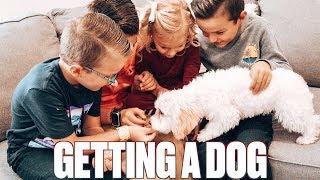 OUR KIDS FINALLY GOT A DOG!