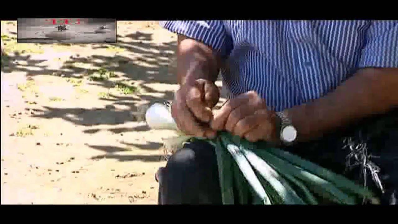 frutas para el acido urico natural para la gota wikipedia acido urico dana rinones