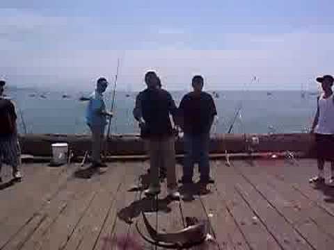 shark on stearns wharf