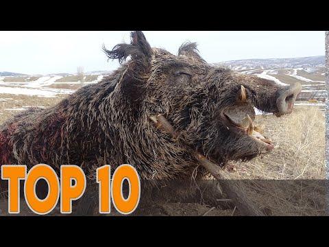 TOP 10 BEST WILD BOAR AMAZING KILL SHOTS, EN İYİ 10 DOMUZ AVI