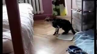 Плохие прыгуны из семейства кошачьих