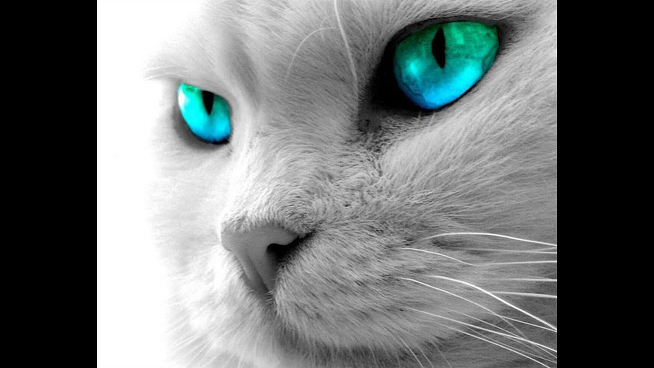 Resultado de imagem para gato lindo