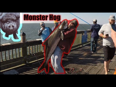 Catching Hogs At Buckroe Fishing Pier(Buckroe Fishing Chronicles Pt1)
