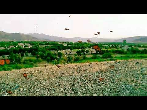 North Waziristan In Summer Weather ❤️