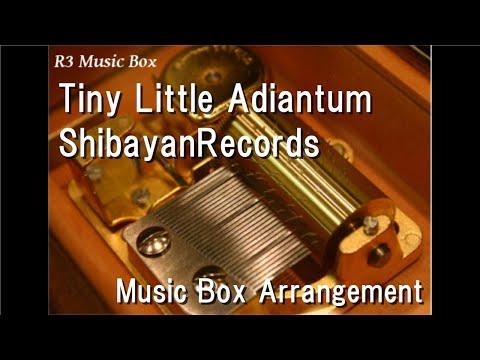 Tiny Little AdiantumShibayanRecords  Box