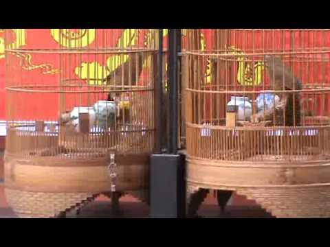 Trận 4 - Giải thi đấu hoạ mi chiến chào mừng 1000 năm Thăng Long - Hà Nội