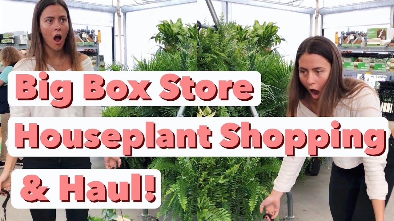 Houseplant Shopping At 6 Big Box Store Locations Home Depot