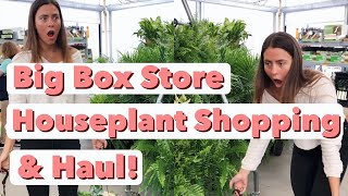 Houseplant Shopping at 6 Big Box Store Locations! | Home Depot, Lowe's, Walmart Indoor Plant Haul!