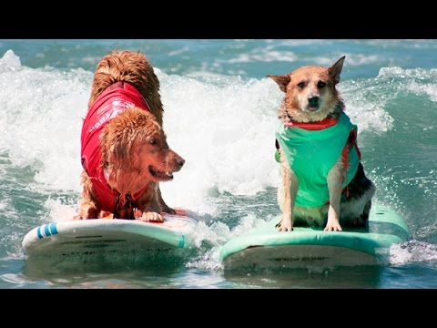 The 2016 Surf Dog Surf-A-Thon