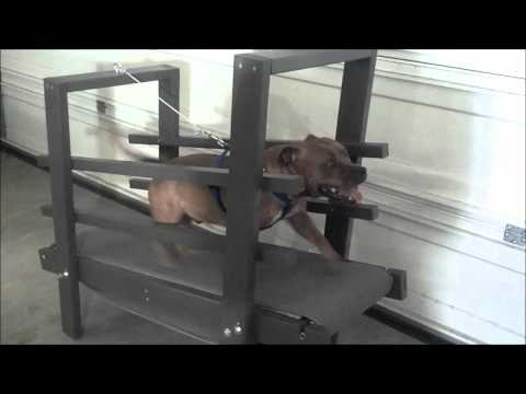 Eco Carpet Mill with Romeo the Staffordshire Bull Terrier