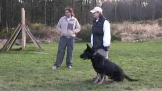 Julie Blanding Training Her Dog, Fred, At A Michael Ellis Seminar In Boston