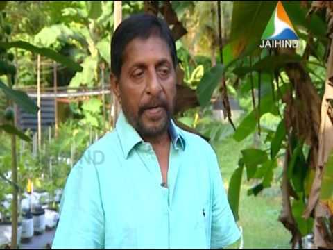 Mannile Thaaram Sreenivasan│Jaihind TV