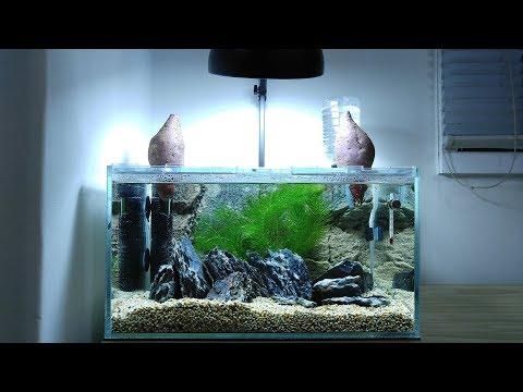 Sweet Potato Betta Tank SETUP  - No Filter, No CO2, NO Ferts 4.5 Gallon Nano Aquarium