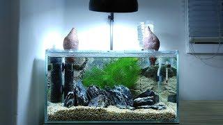 Ep.1 Sweet Potato Betta Tank SETUP  - No filter, No CO2, NO ferts 4.5 Gallon Nano Aquarium
