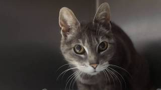 Bringing Your Foster Cat Home - flash class