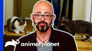 These Feline Duos Need Jackson's Help | My Cat From Hell