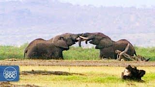 Documentary: African Elephants - Part 2