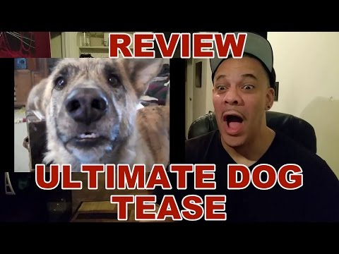 ReAction to The Ultimate Dog Tease