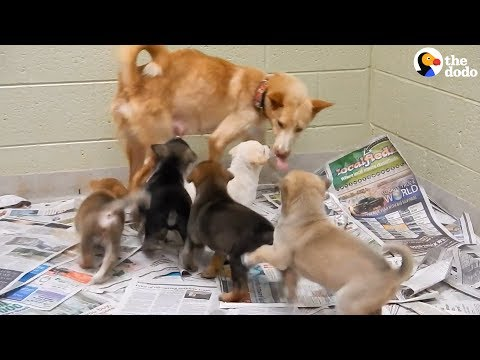 Dog Saved From Meat Farm Surprises Rescuers With Puppies | The Dodo