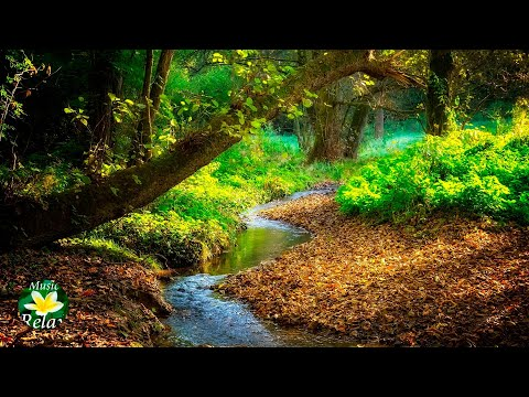 Pleasant sounds of Forest Stream and Birds Singing
