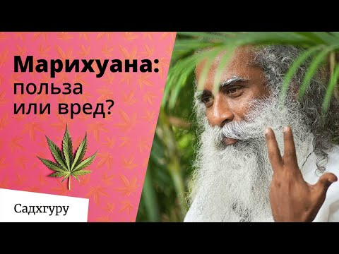 Вредно ли курить марихуану?