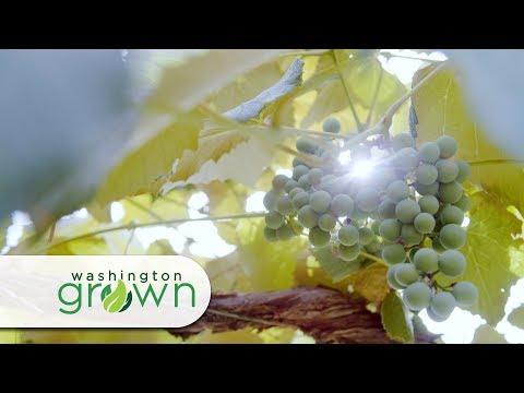 "Washington Grown Season 5 Episode 7 ""Grapes"" with Cooking Segment"