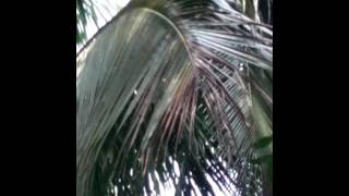 Gambar cover Wanita pemanjat pohon kelapa