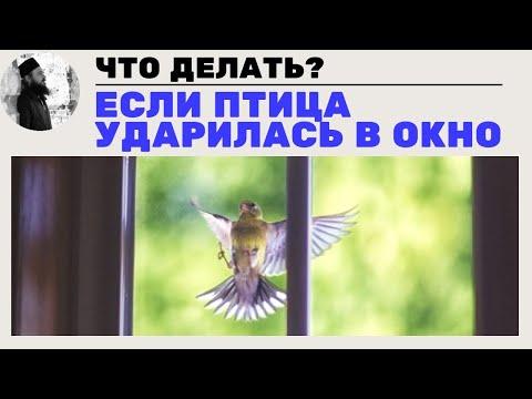 В окно ударилась птица, к чему это?