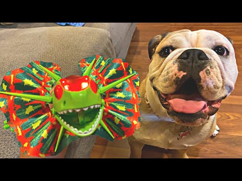 CUTE BULLDOG SCARED OF A LIZARD! Funny Dog Reacts to Remote Control Toy