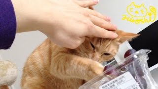 餌はちゃんと与えていますが、人間の食べる物に 興味を示す年頃みたいで...