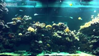 Морской аквариум у вас дома! - компания