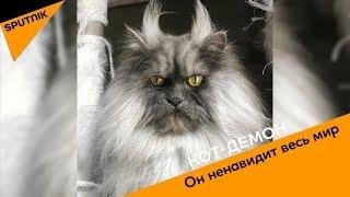 Кот-демон