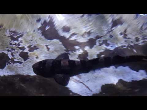 Stingray-TigerSharks petting zoo aquarium