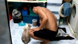 แมวน่ารักคุยกับพ่อ.mp4