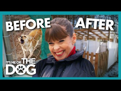 Victoria Gives Struggling Dog Shelter a $250k Makeover! | It's Me or The Dog