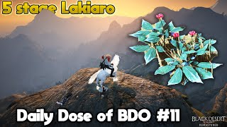 T9 Horse Attempts & 5 Stage Lakiaro | Daily Dose of BDO #11