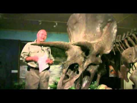Ask DG #120 -- Torvosaurus, Alamosaurus, Deinosuchus and DGTV