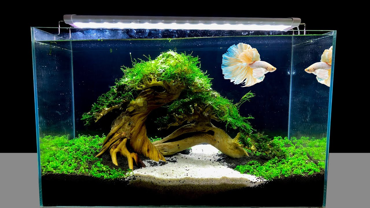 DIY Nano Aquarium Decoration Ideas For Betta, Guppy, Molly Fish Tank - Amazing Aquascape Co2 Filter