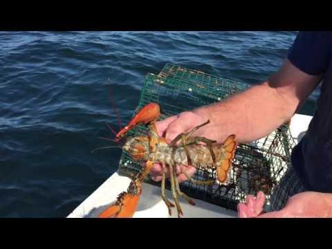 Lobstering - Marblehead, MA
