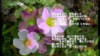 西田佐知子・・去りゆく恋 西田佐知子「愛のささやき 星のナイトクラブ...